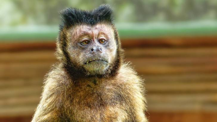 funny looking monkey