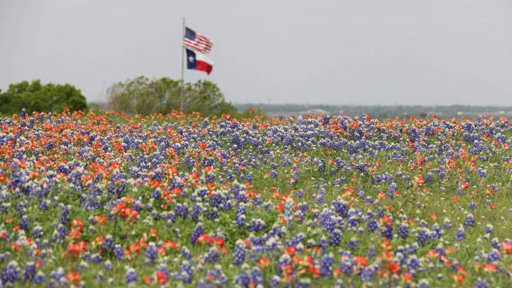 us and texas flags with wild floweres in the foreground