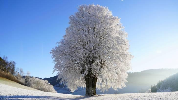 winter tree in the sun glistening