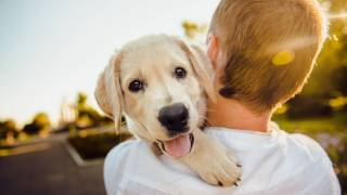 adorable golden puppy being held by owner