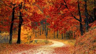 fall tree scene with red and yellow trees