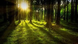 pretty green forest sun shining through